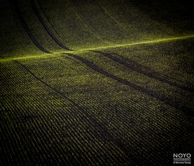 Photograph of grass field line patterns by Norman Young